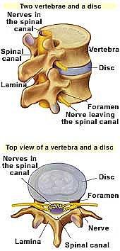 lumbar discs