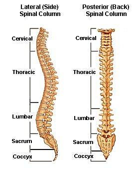 spine full