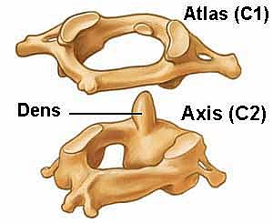 atlas axis
